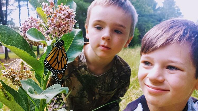 https://www.hiddenhabitat.ca/severn-bridge-school-befriends-butterflies/